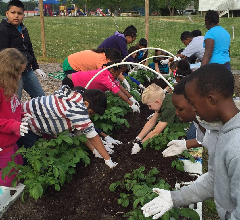 Children from Burke Elementary School work in the Hopewell United Methodist Church vegetable garden. Teachers use the garden to help children learn about the food they eat. Photo by Sandy Golden .