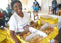Tendai Rebecca Gurupira, area coordinator for The United Methodist Church's Ministry of Women, Youth and Children, holds a box with 100 chicks to be given out to women and girls in the drought-prone Masvingo District in Zimbabwe. The farming project is funded by an $8,000 grant from United Methodist Women. Photo by Kudzai Chingwe, UM News.