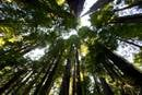 Ancient redwood trees tower above Redwood National and State Parks near Orick, Calif., in 2017. The United Methodist Church's efforts to address climate concerns extends to its pension and benefits programs. File photo by Mike DuBose, UM News.