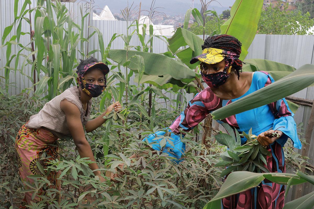 Jolie Mwaidi (right), leader of Kivu United Methodist Women, harvests cassava leaves in her garden in Bukavu, Congo. Joséphine Angel helps collect the crop. Photo by Philippe Kituka Lolonga, UM News.