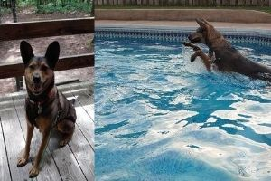 Brenda Smotherman's dog loves the outdoors. (Photos by Ray Smotherman.)