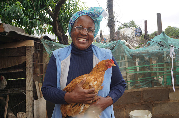 Charity Chiwawa holds a chicken from her poultry project in the Masvingo District of Zimbabwe. From her first batch of 20 birds, she had seven roosters, which she sold to buy feed for the hens. Photo by Kudzai Chingwe, UM News.