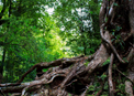In God's forest called The United Methodist Church, every tree is important, whether young or old, splintered or splintery, filled with strength or struggling to stand. With God's help, we can learn—as if for the first time—that we need each other to thrive. Image courtesy of the Connectional Table.