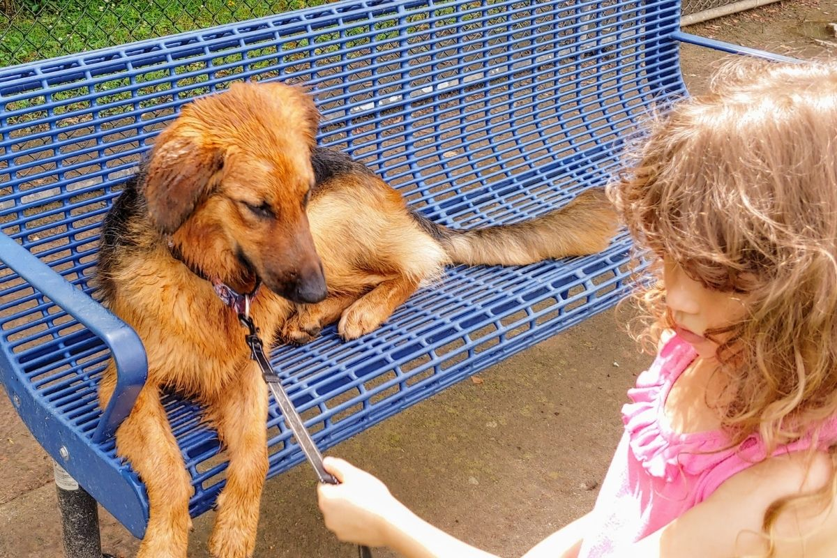 Andrew Schleicher and his family adopted a Golden Retriever/Goldendoodle mix dog on July 10th. The 15 month old Avenger is enjoying spending time with her human sister Eva (7) as pictured. (Photo courtesy of Andrew Schleicher.)