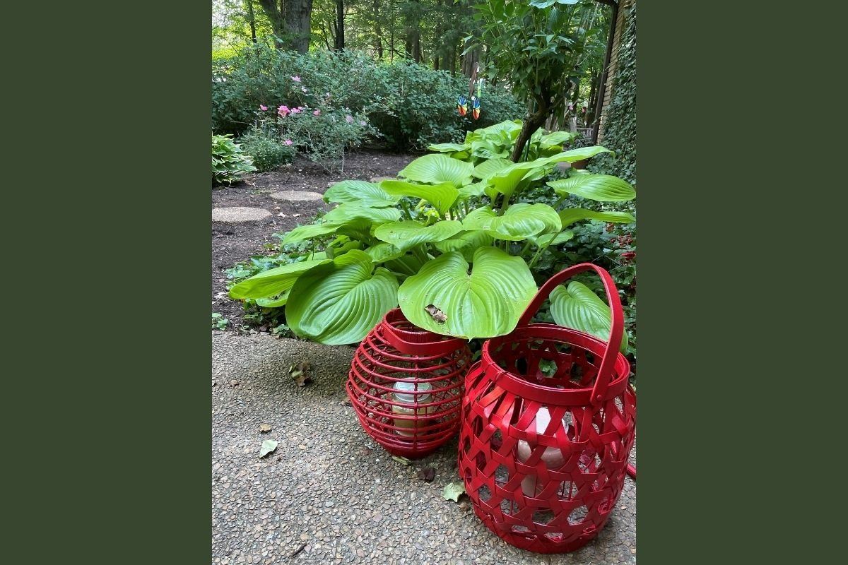 Bright red lanterns welcome visitors to part of Diane Degnan's garden path. Diane's backyard got a makeover courtesy of a radio station giveaway. (Photo courtesy of Diane Degnan.)