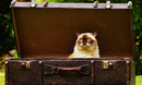 Did you Remember to pack the Cat? Image byHere and now, unfortunately, ends my journey on PixabayfromPixabay